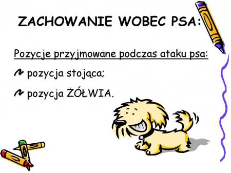 Zasady kontaktu z psem