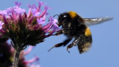 Pszczółki pracują - 06.03.2019