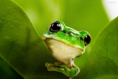 Grasz w zielone ?